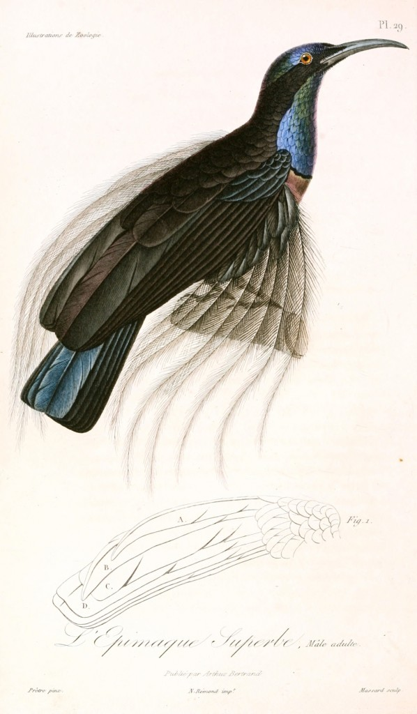 Animal - Bird - French - 1831 -  (12)