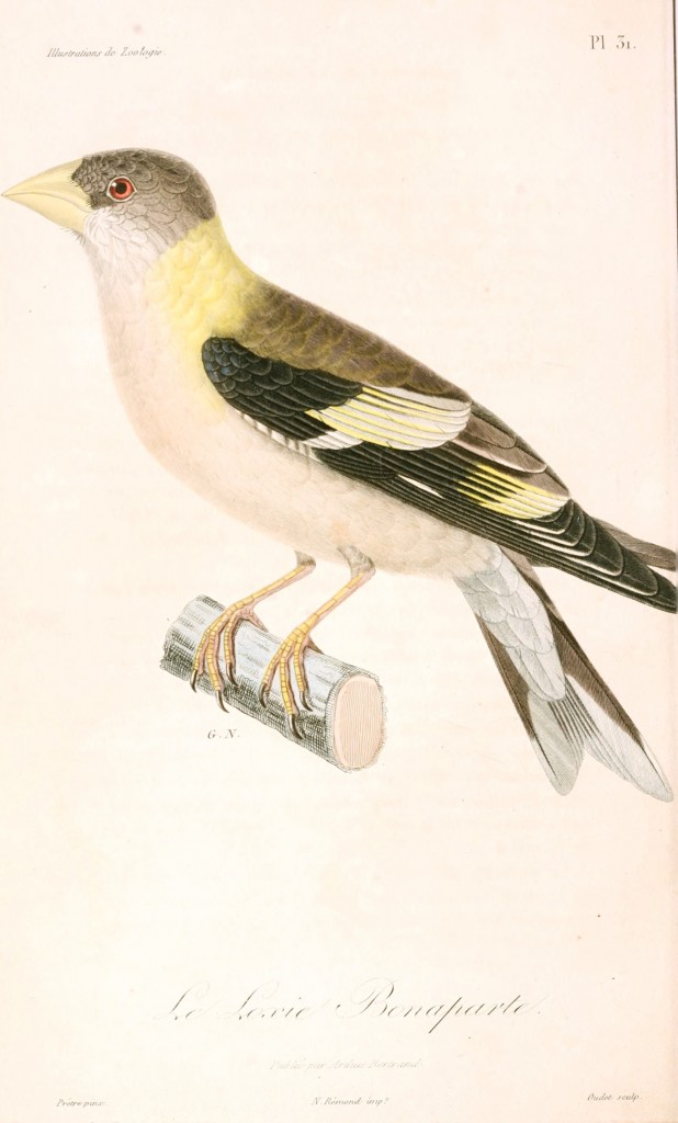 Animal - Bird - French - 1831 -  (13)