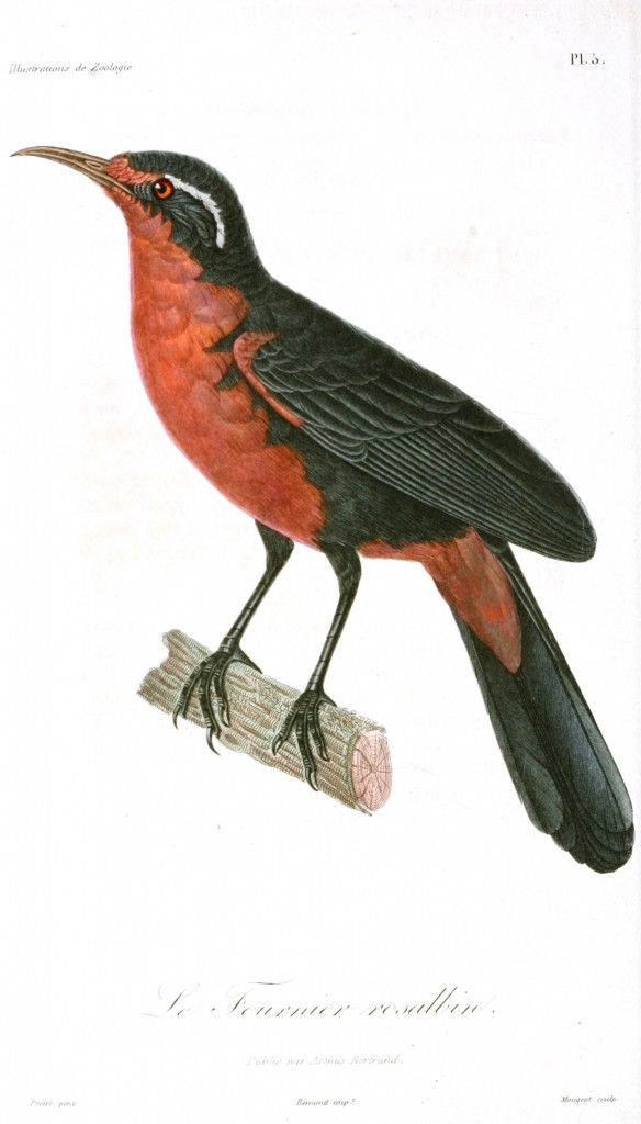 Animal - Bird - French - 1831 -  (3)