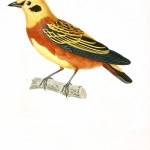 Animal - Bird - French - 1831 -  (4)