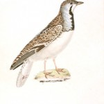 Animal - Bird - French - 1831 -  (7)