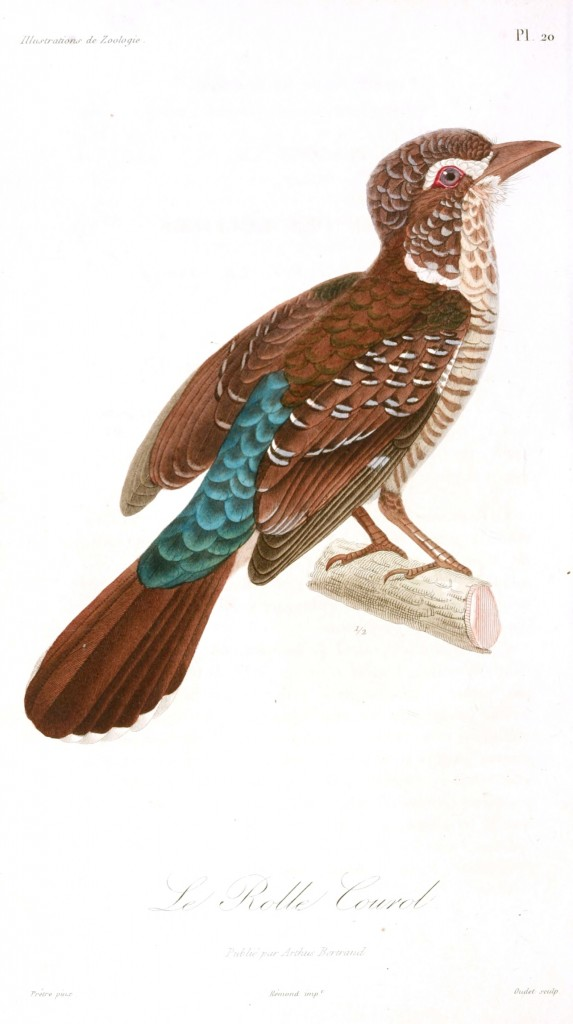 Animal - Bird - French - 1831 -  (9)