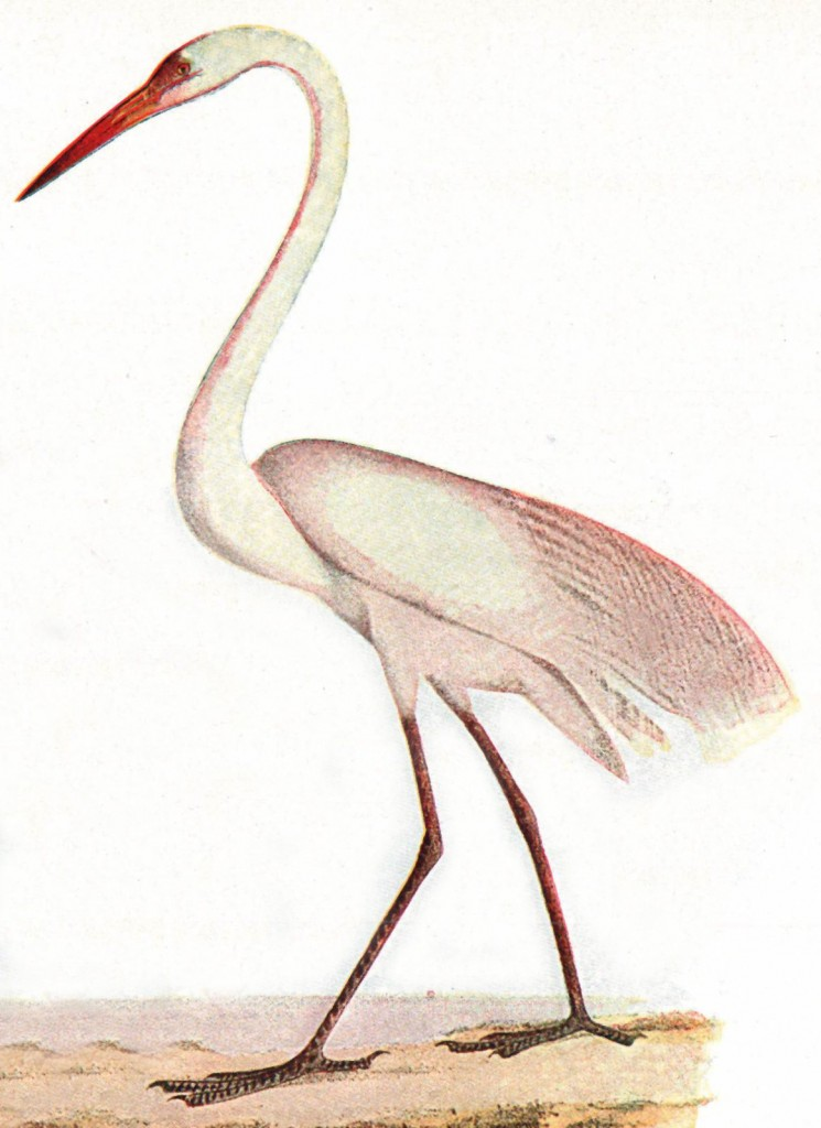 the meaning of a white heron A white heron, though the opposite in outcome jewett concludes her story in the voice of the omniscient narrator traditional in victorian fiction, weighing the choice made by sylvy not to reveal the nest of the white heron to the hunter.