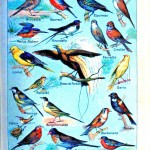 Animal - Educational Plate - Small birds