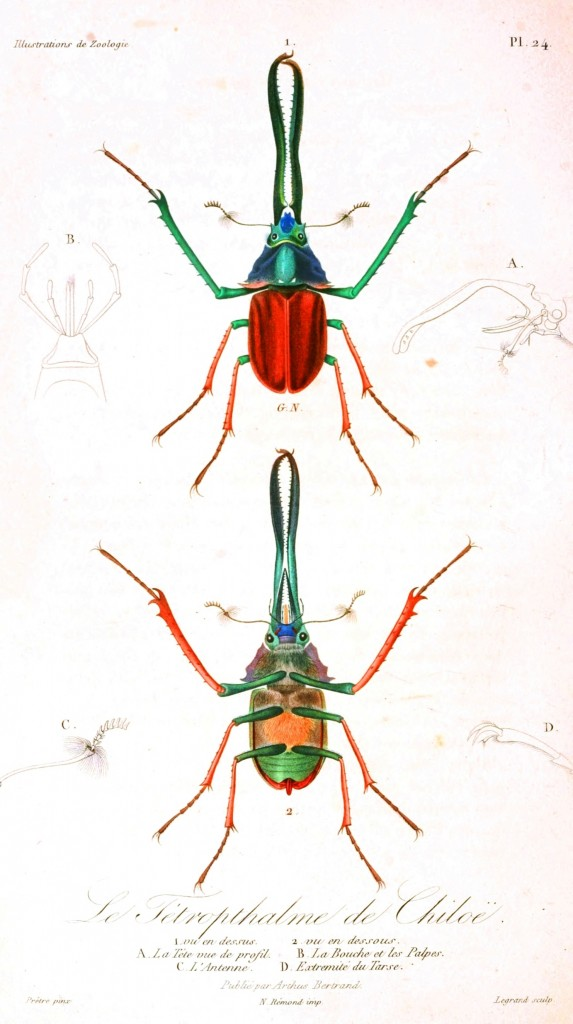 Animal - Insect - French - 1831 (1)