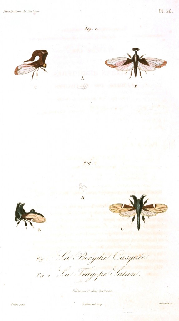 Animal - Insect - French - 1831 (6)
