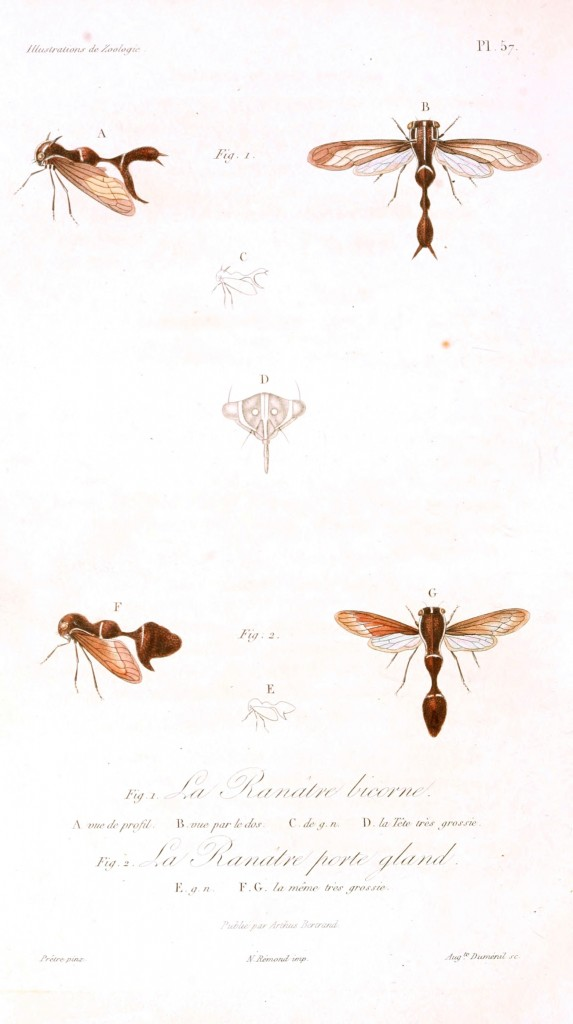 Animal - Insect - French - 1831 (7)