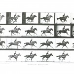 Animal - Locomotion - Horse gallop