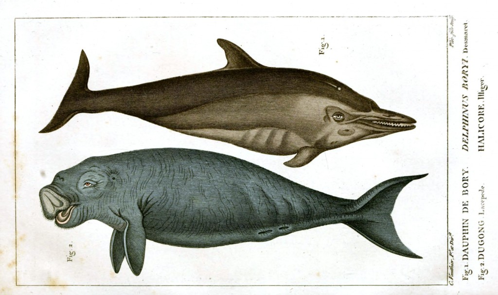 Animal - Sea Mammal - Manatee and Dolphin