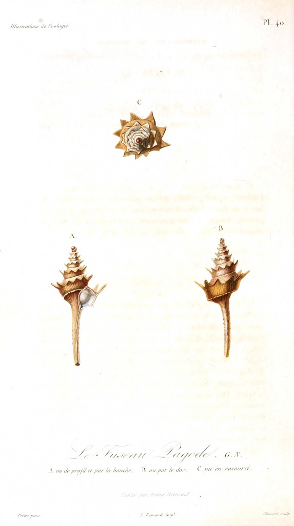 Animal - Seashell - French - 1831 - (16)