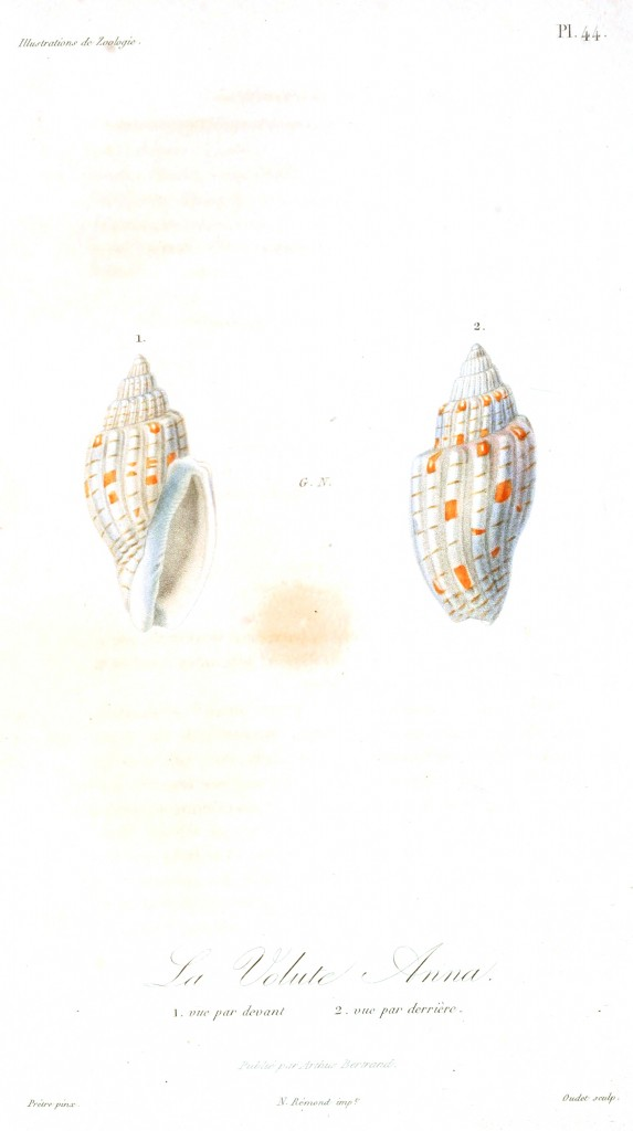Animal - Seashell - French - 1831 - (19)