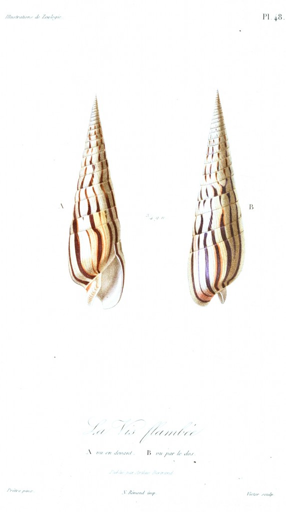 Animal - Seashell - French - 1831 - (20)