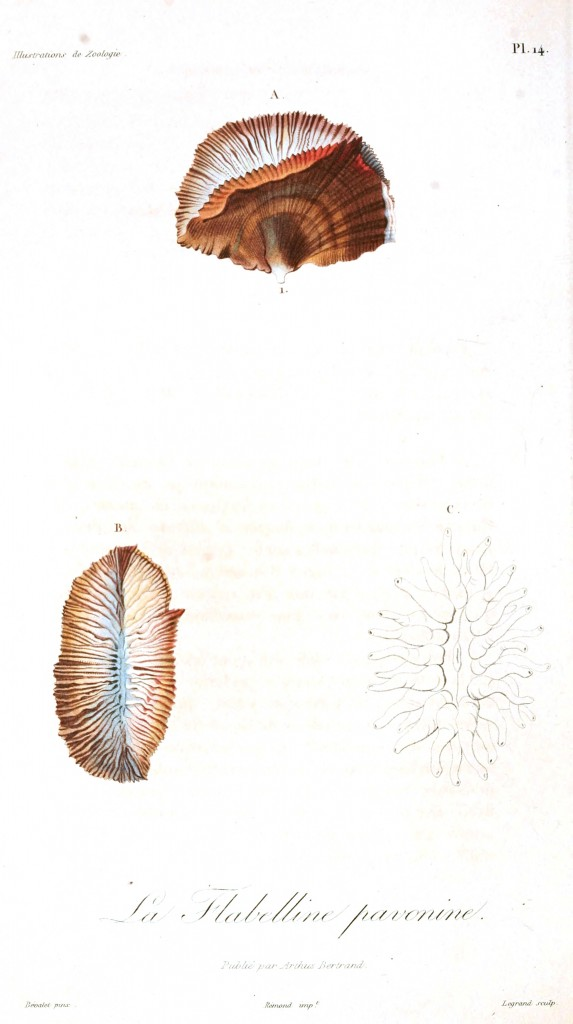 Animal - Seashell - French - 1831 - (6)