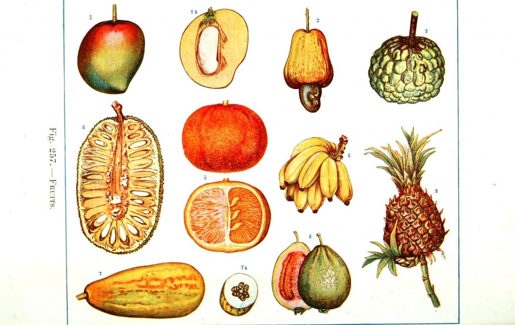 Botanical - Educational Plate - Fruits