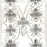 Entertainment - Playing card - Eight of Clubs - Bees