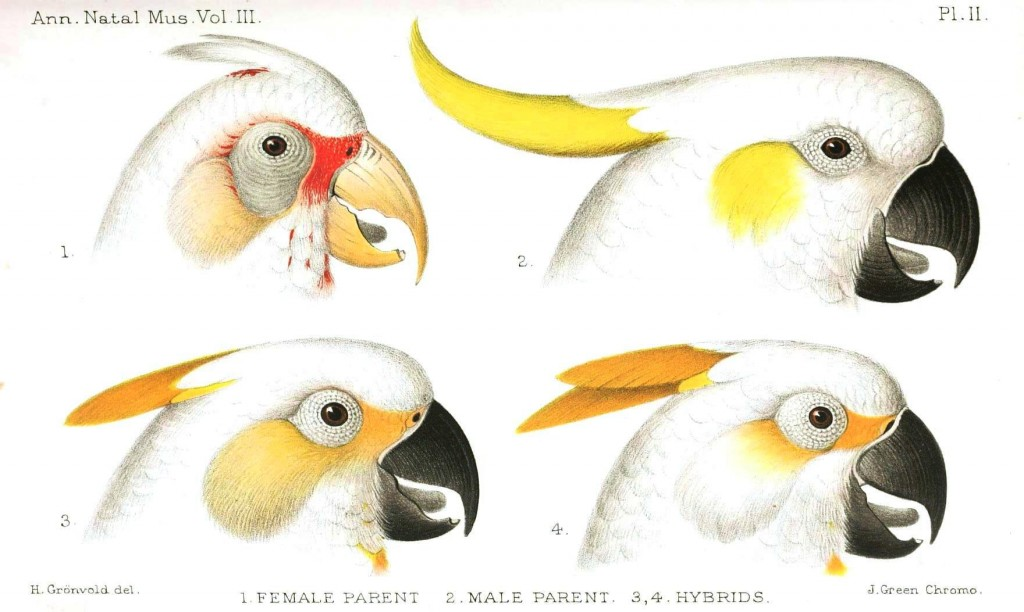 Animal - Animal head - Bird - Hybrid Parrot faces