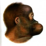 Animal - Animal head - Non human primate