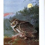 Animal - Bird - Owl - Great horned owl