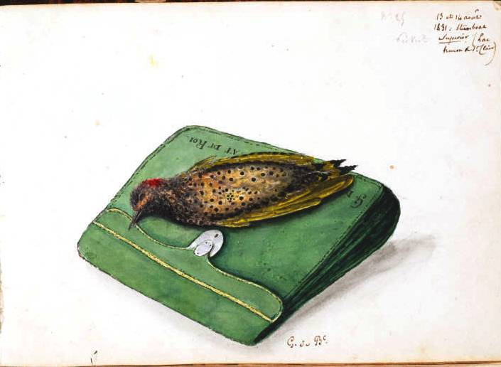 Animal - Bird - Robin - Bird that passed away on top of briefcase