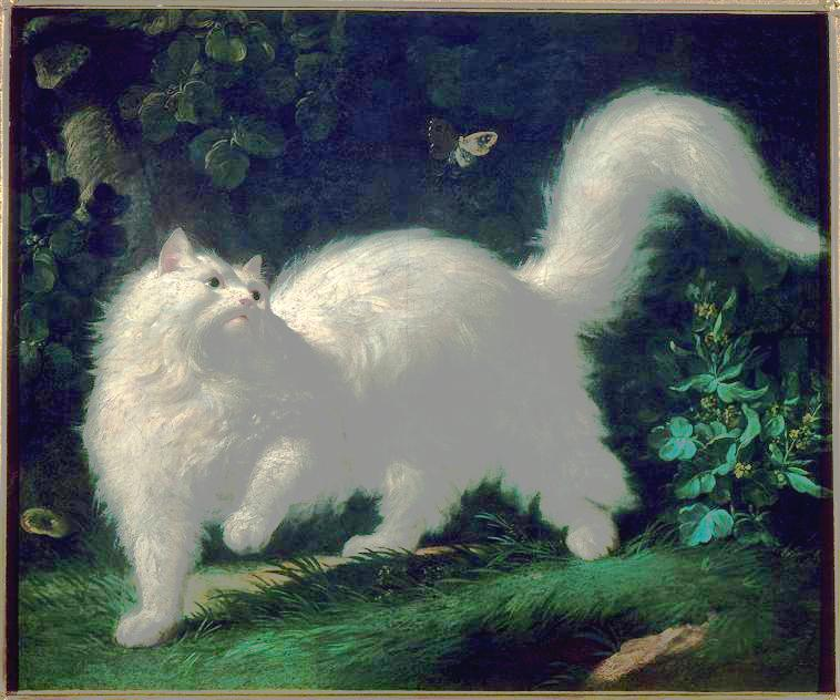Animal - Cat - Angora cat and butterfly