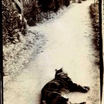 Animal - Cat - Photo - Cat laying down on a road