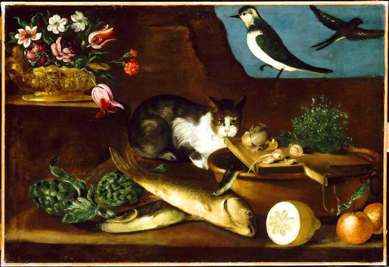 Animal - Cat - Still life with cat