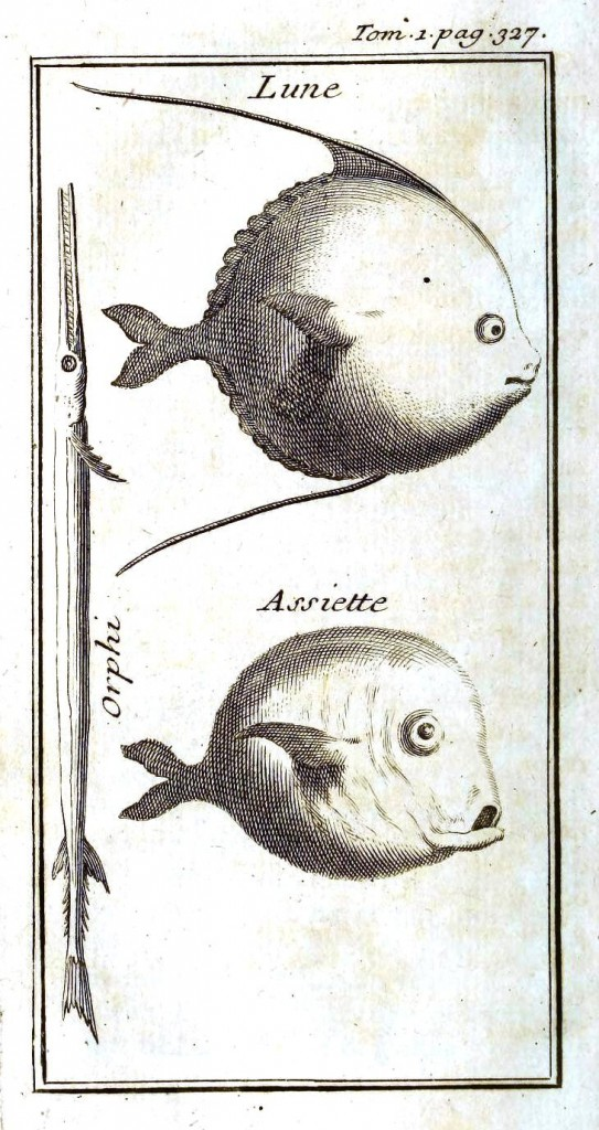 Animal - Fish - 1700s pen and ink