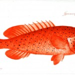 Animal - Fish - Orange fish with spots