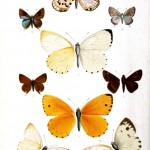 Animal - Insect - Butterflies - Orange