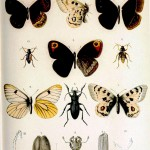 Animal - Insect - Butterflies and beetles
