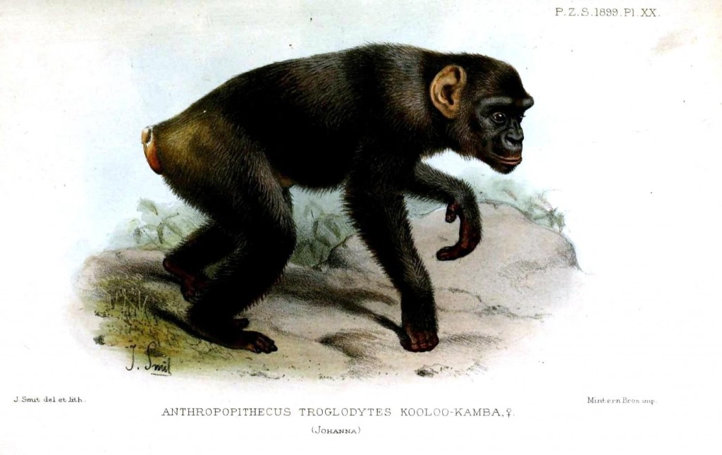 Animal - Non human primate - Monkey