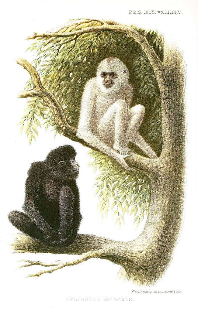 Animal - Non human primate - Monkeys in a tree
