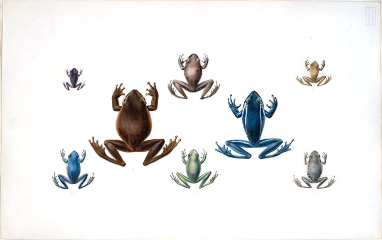 Animal - Reptile - Frogs