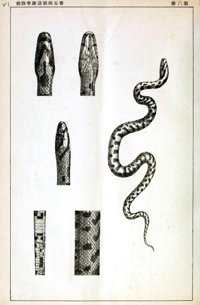Animal - Reptile - Snake - Anatomy