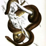 Animal - Reptile - Snake - Brown African