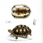 Animal - Reptile - Turtle - African 3