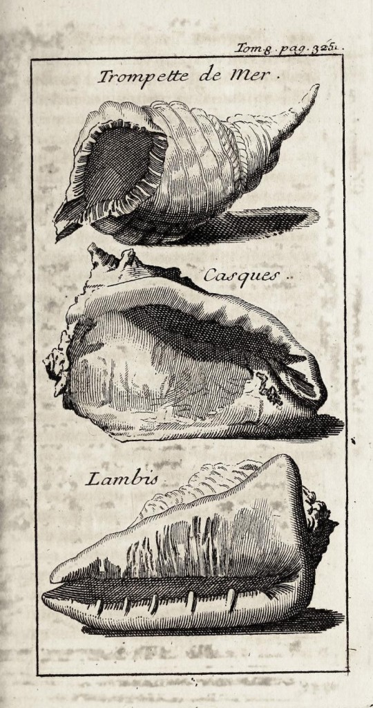 Animal - Sea Shell - 1700s