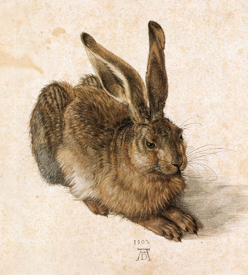 Animal - Woodland - Rabbit - Young hare, Durer