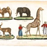 Animals - Wild animals - Educational plate