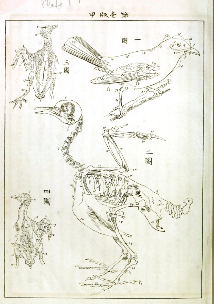 Animimal - Bird - Anatomy