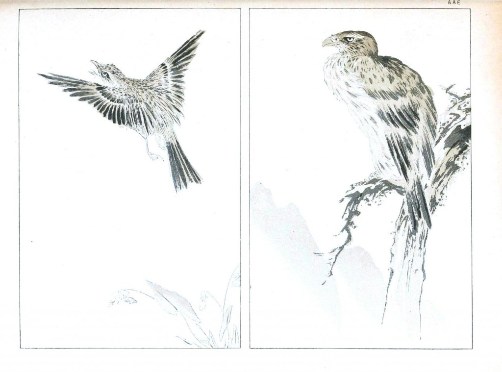 Art - Asian - Japanese brush painting of hawks