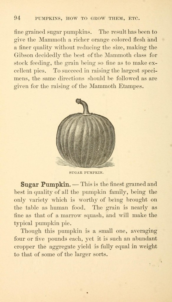 Botanical -  Pumpkin