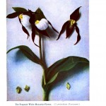 Botanical - Flower - White orchid