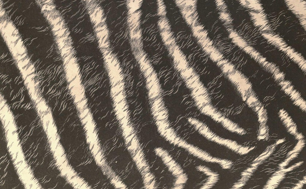 Design - Paper - Zebra fur