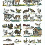 Juvenile - Educational plate - Domestic animals, French