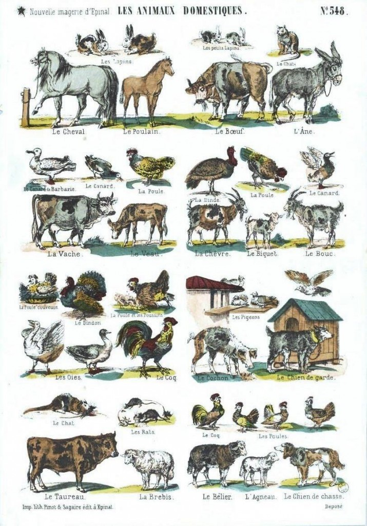 Juvenile Educational Plate Domestic Animals French
