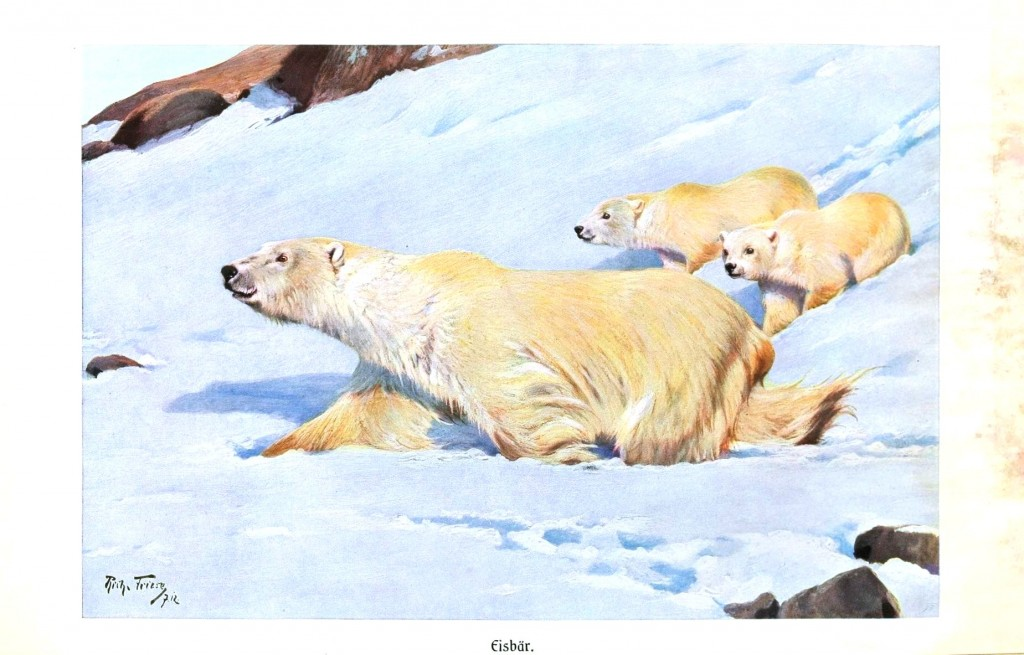 Animal - Bear - Polar bear and cubs