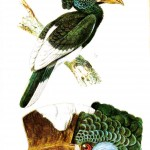 Animal - Bird - Bird head with crest