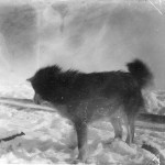 Animal - Dog - Dog in the snow photo 1905