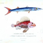 Animal - Fish - Poissons 1